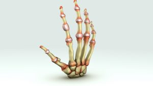 There are capsules around our joints